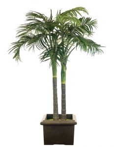 Coconut Palm With Optional Pots
