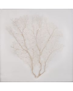 Cream Sea Fan Wall Art