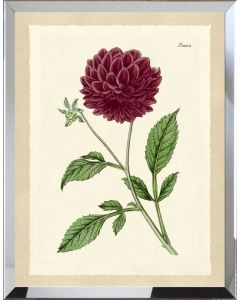 Deep Red Botanical Flower III Framed Wall Art - Available in Variety of Sizes