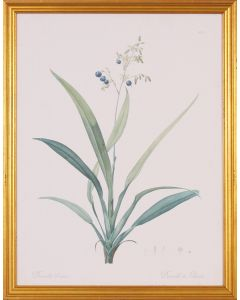 Dianella Botanical Wall Art in Gold Wood Frame