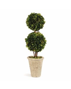 Double Sphere Boxwood Topiary