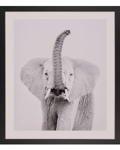 Elephant Framed Photograph