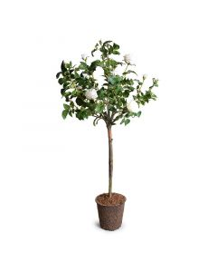 Faux White Rose Tree Topiary 56 Inch Height