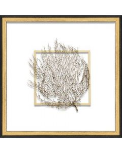Gold Exotic Sea Fan Suspended between Glass in Hand-Distressed Black and Gold Frame - 18 Inches  x 18 Inches