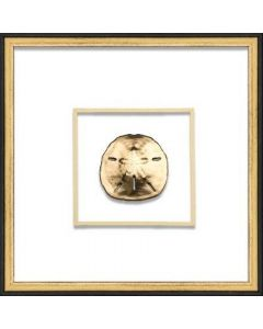Gold Sand Dollar Coastal Beach Wall Art in Black & Gold Frame
