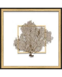 Gold Sea Fan Suspended between Glass in Hand-Distressed Black and Gold Frame - 18 Inches x 18 Inches