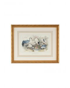 Herons, Eagrets, & Cranes Framed Wall Art