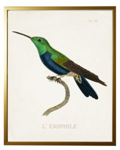 Hummingbird in Shadowbox Wall Art - Available in Three Different Sizes
