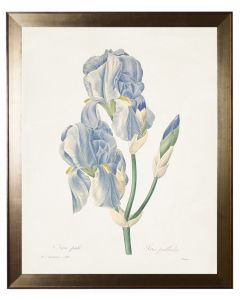 Iris Pallida Botanical Wall Art in a Flat Metallic Moulding