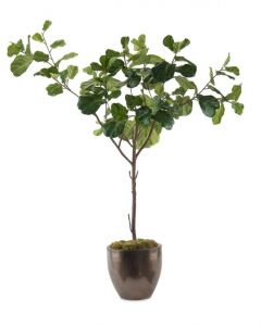 Fiddle Leaf Fig Tree in Glazed Bronze Ceramic Pot