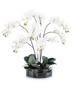 White Orchids in Low-Sided Round Vase with Black River Rock