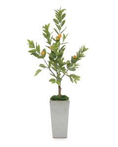 Lemon Tree with Mood Moss in Glazed Pottery Planter
