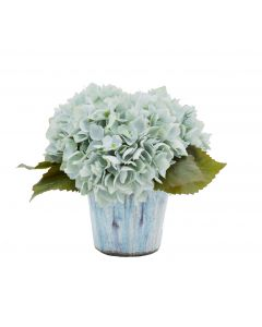 Light Blue Hydrangea in Blue Ceramic Pot