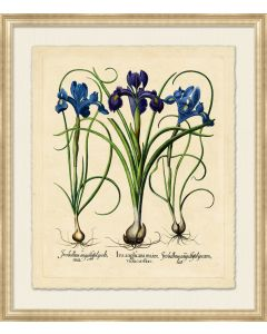 Medium Besslers Iris Framed Giclee Framed Wall Art