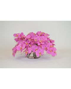 Pink Orchids in a Short Glass Vase
