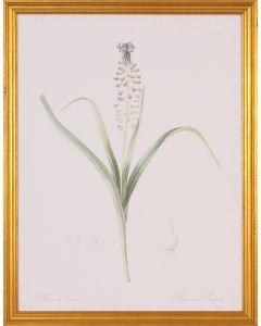 Muscari Botanical Wall Art in Gold Wood Frame