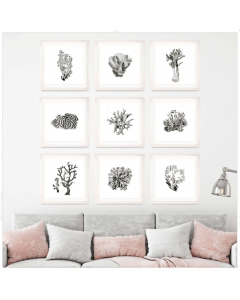 Simple Black and White Coral Framed Wall Art Available in Two Different Sizes