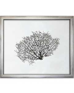 Natural Sea Fan on White Silk Framed Art - 15 Inches x 18 Inches - Various Fabric Colors Available