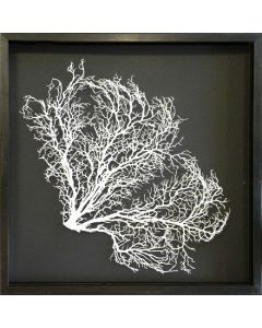 Painted Exotic Sea Fan Coastal Beach Wall Art on Charcoal Gray Mat with Aged Black Frame - 24 x 24 - Available in 18 Colors