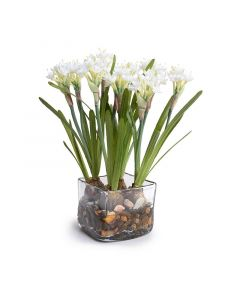 Small Paper White Narcissus Arrangement in Clear Square Vase