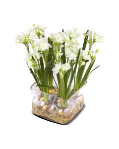 Paper White Narcissus in Square Clear Vase