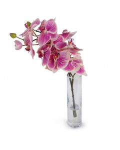 Fuchsia and Cream Phalaenopsis Orchid in Clear Glass Vase