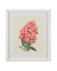 Pink Flower Study I Wall Art - CALL FOR AVAILABILITY