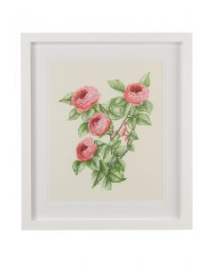 Pink Flower Study II Wall Art  - CALL FOR AVAILABILITY