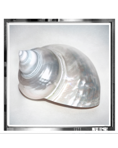 Pip Bloomfield Pearl Shells Wall Art