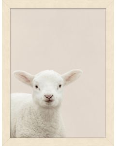 Portrait of Lamb Framed Wall Art