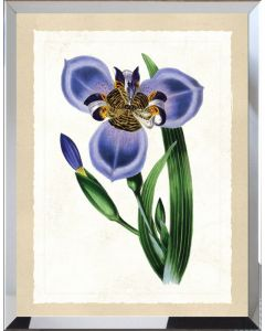 Purple Botanical Flower II Framed Wall Art - Available in Variety of Sizes
