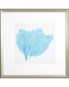Sea Fan IV Lithograph