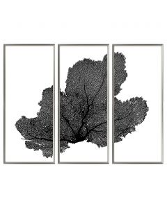 Sea Fan Triptych Coastal Beach Wall Art