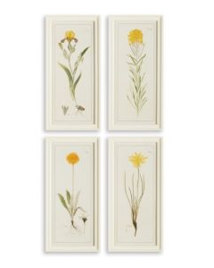 Set of 4 Yellow Flower Study Prints