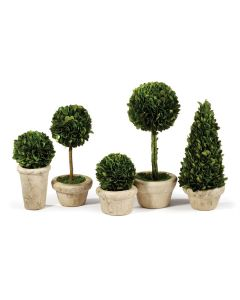 Set of 5 Boxwood Topiaries in Pots