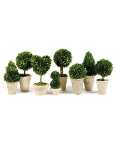 Set of 8 Boxwood Topiaries in Pots