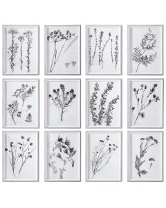 Set of 12 Contemporary Florals Framed Botanical Prints