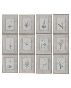Set of 12 Spring Florals Framed Botanical Prints