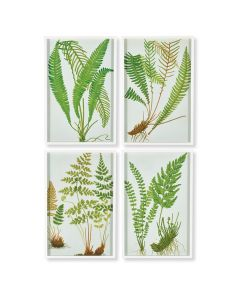 Set of 4 Fern Botanical Study Wall Art Prints - ON BACKORDER UNTIL LATE JULY / EARLY AUGUST 2019