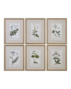Set of 6 Green Floral Botanical Study Prints in Wooden Frame