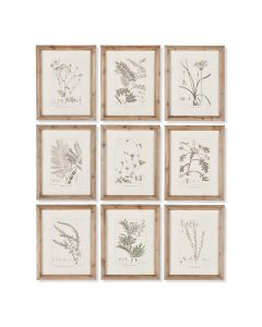Set of 9 Botanical Framed Wall Art Illustrations - ON BACKORDER UNTIL FEB 2021
