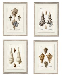 Set of Four Neutral Knier Shells Wall Art