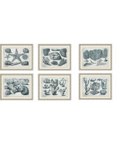 Set of Six Aquatic Specimens Framed Wall Art