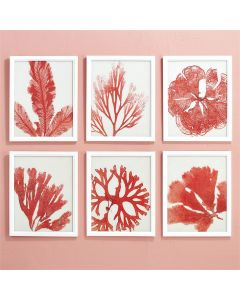 Set of 6 Pink and White Reef Coral Print Wall Art with White Wood Frames
