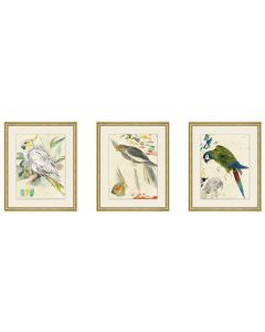 Set of Three Parrot Wall Art - Set 1