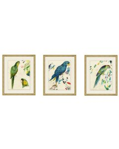 Set of Three Parrot Wall Art-Set II