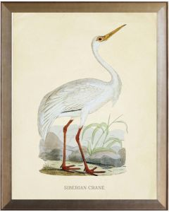 Siberian Crane Framed Wall Art - Available in Three Different Sizes