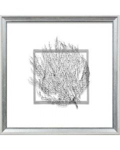 Silver Exotic Sea Fan Suspended between Glass in Hand-Distressed White and Silver Frame - 18 Inches x 18 Inches