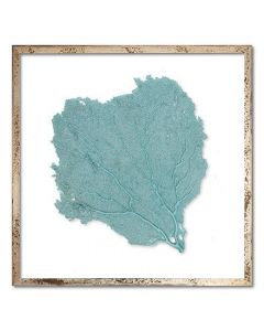 Square Classic Sea Fan Suspended between Glass Framed Art - 24 x 24 - Available in 18 Sea Fan Colors