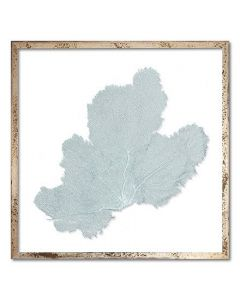 Square Classic Sea Fan Suspended between Glass Framed Art - 30 x 30 - Available in 19 Sea Fan Colors